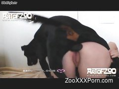 Awesome black dog pounds a slutty whore in the doggy style